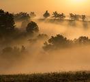 Лятно утро в Странджа ; comments:43