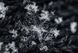 Снежно бижу ; comments:17