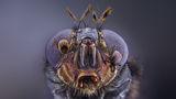 Муха, кърлежи и въшки ; comments:11