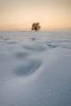 Сам в снежната пустиня ; Comments:38