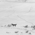 Зимен пейзаж с куче ; comments:57