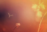 Полет на мечти ; Comments:18