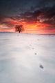 Огнен сняг ; Comments:23