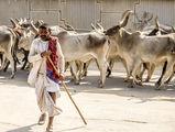 Пастир от Раджастан,Индия ; comments:26