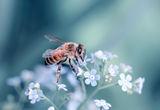 Честит празник пчелари !!! ; comments:26