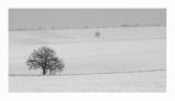 Зимен пейзаж от Лудогорието ; Коментари:16