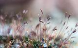 Пролетно събуждане ; comments:7