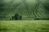 Зелено, по-зелено....позелени ; Comments:23