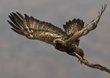 Скален орел ; comments:18