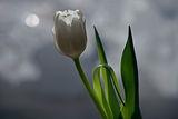 Време е за пролет ; Comments:23