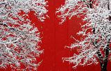 Преди целувката (В цветовете на март) ; comments:21