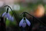 Защото беше цвете и нищо не очакваше.... ; comments:31