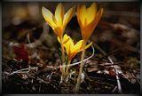 Иде пролет ; comments:49
