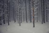 В тъмната гора... ; Comments:22