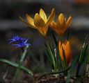 Пролет ; comments:29