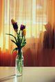Пролетен сюжет,с котешки акцент ;) ; comments:22
