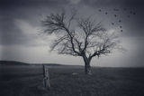 The tree ; Коментари:12