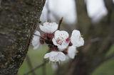Пролет пукна  II ; comments:12
