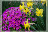 Цветята в моята градина ; comments:15