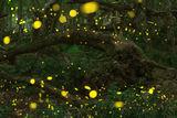 Приказната гора ; comments:27