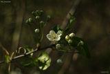 Добро пролетно утро от Кайлъка ! ;) ; Comments:54