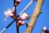 Пролет ; Comments:5