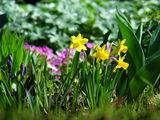 Пролет в градината... ; Коментари:21