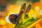 Garden snail ; comments:20