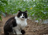 Farm Cat ; comments:8