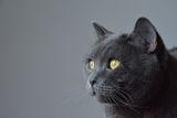 El gato зяпа... ; comments:6