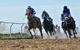 Пети национални конни надбягвания , Сандрово 2017 ; comments:6