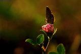светлината и пеперудата ; comments:18