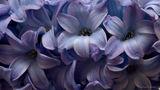 Пролетно ухание ; comments:7