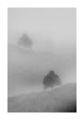 Мъгливо зачатие ; comments:20