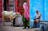 Цветовете на Индия ; comments:42