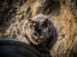 Квартален тигър ; comments:3
