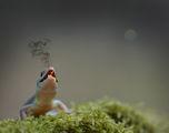 Горивата от природата ; comments:96