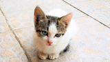 Котето ми Албинос ; comments:3