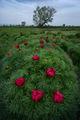 Пролетен разцвет ; Comments:22