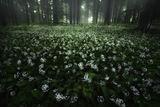 С дъх на гора ; comments:26