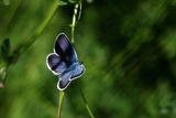 Пролетно макро ! ;) ; comments:59