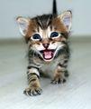 малко тигърче ; comments:9