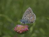 Пеперуда ; comments:72