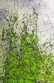 Сред зелените треви започват весели игри ; Comments:26