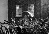 Летен дъжд ; Коментари:21
