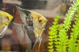 Рибка ; comments:6