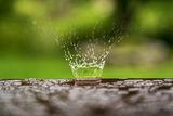 В малкия свят на дъжда. ; comments:6