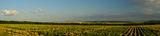 Моята слънчогледена панорама ; comments:18