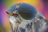 Horsefly ; comments:2