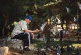 Мъжът с гълъбите ; No comments